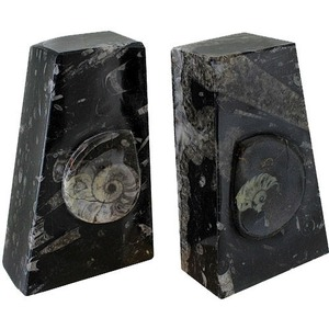 Photo of the: Ammonite Fossil Bookends