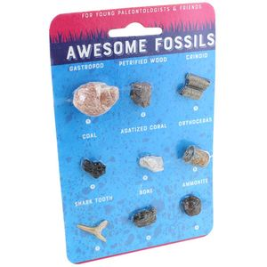 Photo of the: Awesome Fossils Collection - 9 Real Fossils