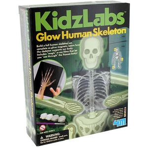 Photo of the: Glow Human Skeleton 4M Kit