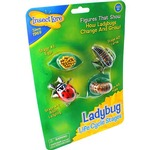 Photo of the: Ladybug Life Cycle Stages