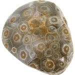 Photo of the: Polished Fossil Coral