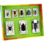 Photo of the: Real Insects Specimen Set 1 - 8 pieces