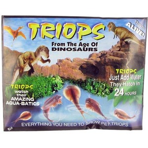 Photo of the Triops Eggs